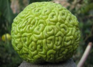 Изображение - Адамово яблоко применение настойки для суставов рецепт 005afc4f52675ae2e347037d5278729f9818718c-300x216